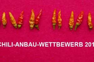 Chili-Anbau-Wettbewerb-2013-frieren-schwitzen