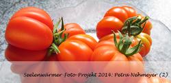 tomate_fuer_teilnehmer_petra2_frieren_schwitzen_k